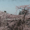 弘前城天守ライブカメラ(青森県弘前市下白銀町)