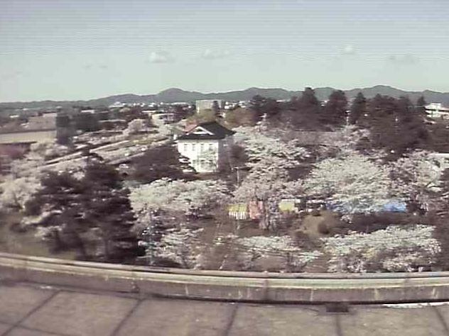 鶴岡公園・桜