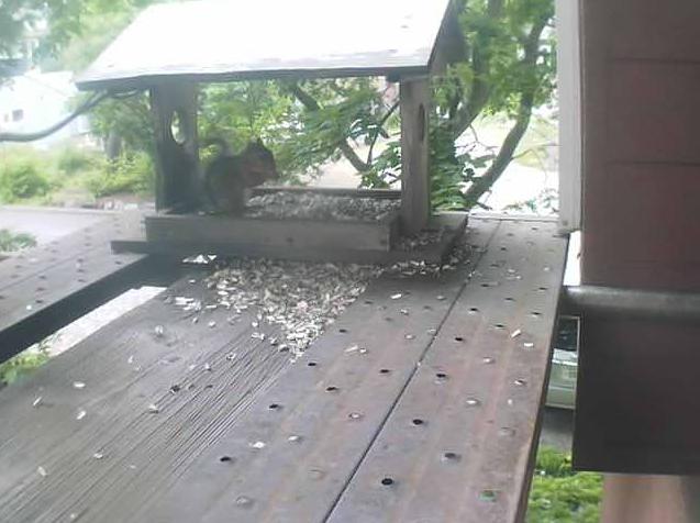 安暖庭リビング横からリスや野鳥が見えるライブカメラ。