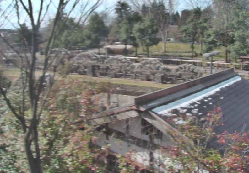 砺波チューリップ公園五連水車ライブカメラ(富山県砺波市花園町)
