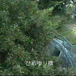安里川ひめゆり橋ライブカメラ(沖縄県那覇市牧志)
