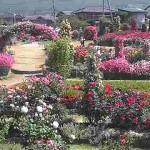 一本木公園ライブカメラ(長野県中野市一本木)