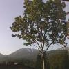 志津温泉まいづるやライブカメラ(山形県西川町志津)
