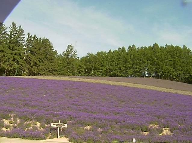 ファーム富田トラディショナルラベンダー畑ライブカメラは、北海道中富良野町基線北のファーム富田に設置されたトラディショナルラベンダー畑が見えるライブカメラです。
