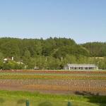 ファーム富田花人の畑ライブカメラ(北海道中富良野町)