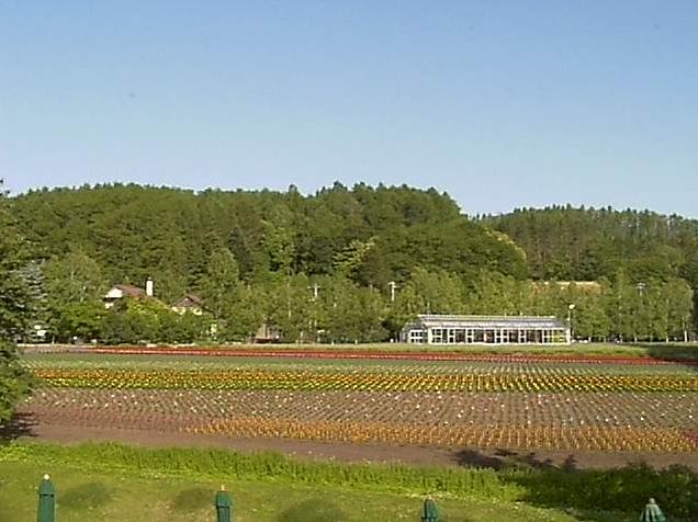 ファーム富田から花人の畑が見えるライブカメラ。