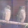 釧路湿原野生生物保護センターライブカメラ(北海道釧路市北斗)