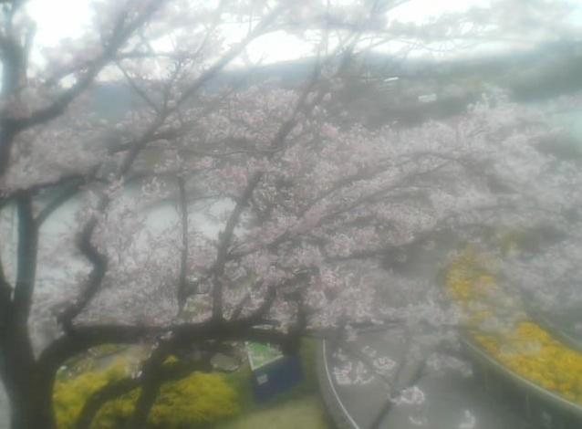 津久井湖観光センターから津久井湖・観光センター入口・観光センター駐車場・桜