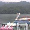 勝瀬観光相模湖湖上ライブカメラ(神奈川県相模原市緑区)