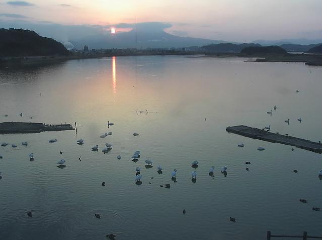米子水鳥公園コハクチョウ