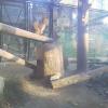 福岡市動物園ツシマヤマネコライブカメラ(福岡県福岡市中央区)