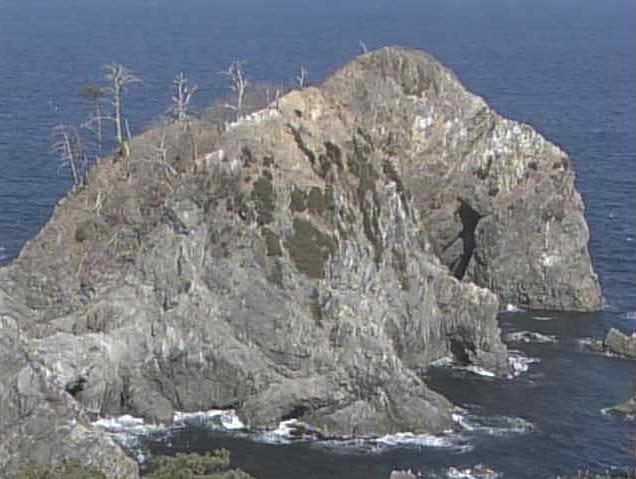 三陸海岸宮古のウミネコ繁殖地