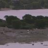 【配信終了】漫湖干潟マングローブライブカメラ(沖縄県豊見城市豊見城)