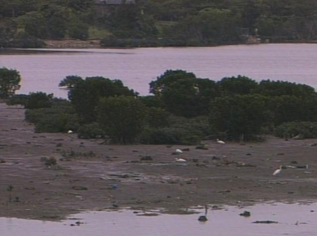 漫湖の干潟とマングローブ