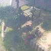 鯖江市西山動物園レッサーパンダ屋外展示場ライブカメラ(福井県鯖江市桜町)