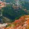 吉野山上千本吉野桜ライブカメラ(奈良県吉野町吉野山)