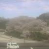 西山公園ライブカメラ(福井県鯖江市桜町)