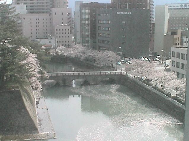 福井市役所から福井城跡・桜