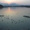 米子水鳥公園コハクチョウライブカメラ(鳥取県米子市彦名新田)
