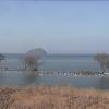 水鳥公園ライブカメラ(滋賀県長浜市湖北町)