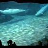 【配信終了】名古屋港水族館ベルーガプールライブカメラ(愛知県名古屋市港区)