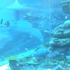 【配信終了】名古屋港水族館サンゴ礁大水槽ライブカメラ(愛知県名古屋市港区)