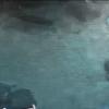 【配信終了】名古屋港水族館ウミガメ回遊水槽ライブカメラ(愛知県名古屋市港区)