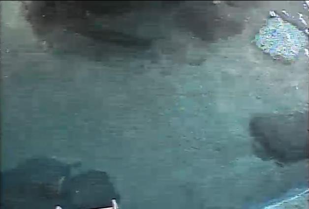 名古屋港水族館ウミガメ回遊水槽