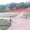くじゅう花公園ライブカメラ(大分県竹田市久住町)