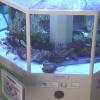 岡山理科大学好適環境水水槽ライブカメラ(岡山県岡山市北区)