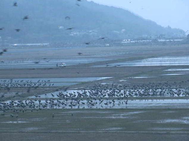 出水平野から荒崎ツル保護区(休遊地)