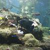 京都大学白浜水族館ライブカメラ(和歌山県白浜町)