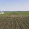 北海道スイートコーン畑ライブカメラ(北海道訓子府町東町)