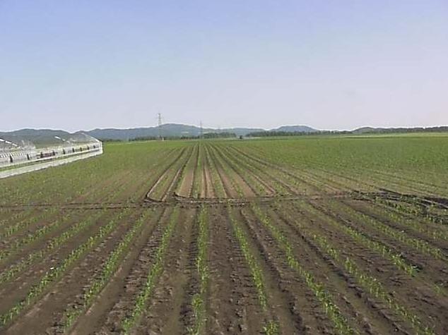 北海道スイートコーン畑ライブカメラは、北海道訓子府町東町の北海道クノール食品訓子府工場に設置されたスイートコーン畑が見えるライブカメラです。
