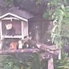 野毛山動物園レッサーパンダライブカメラ(神奈川県横浜市西区)