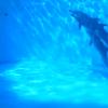 【配信終了】名古屋港水族館イルカプールライブカメラ(愛知県名古屋市港区)