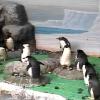 【配信終了】名古屋港水族館ペンギン水槽ライブカメラ(愛知県名古屋市港区)
