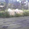 平川動物公園ホワイトタイガーライブカメラ(鹿児島県鹿児島市平川町)