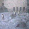 旭山動物園ぺんぎん館放飼場ライブカメラ(北海道旭川市東旭川町)