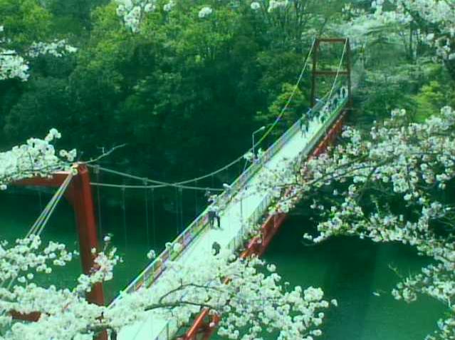 新城桜淵付近から豊川・桜
