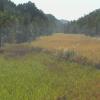 黒沢湿原ライブカメラ(徳島県三好市池田町)