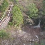 奥祖谷二重かずら橋ライブカメラ(徳島県三好市東祖谷)