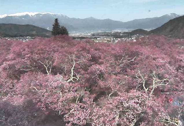 高遠閣から高遠城址公園・桜