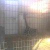 茶臼山動物園キリンライブカメラ(長野県長野市篠ノ井)