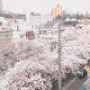 中目黒桜並木ライブカメラ(東京都目黒区青葉台)