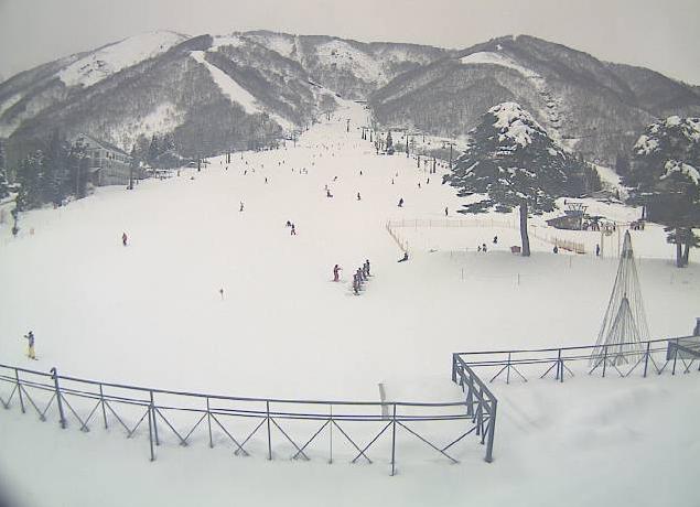 白馬五竜スキー場ライブとおみゲレンデ