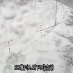 国道112号横手ライブカメラ(山形県西川町砂子関)