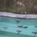 ICTV飯田市立動物園ペンギンの丘ライブカメラ(長野県飯田市扇町)