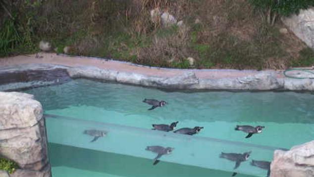 飯田市立動物園ペンギンの丘