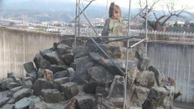 飯田市立動物園サル山